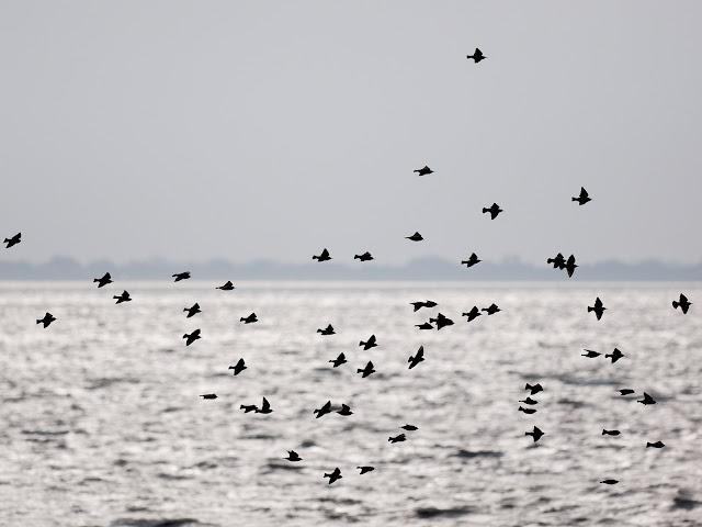 Vogelschwarm (300mm, f/4, 1/8000sek., ISO320)