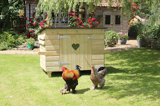 Hen Houses for Large Flocks of Chickens