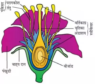 10 Class Science Notes in hindi chapter 8 How do Organisms Reproduce Reproduction