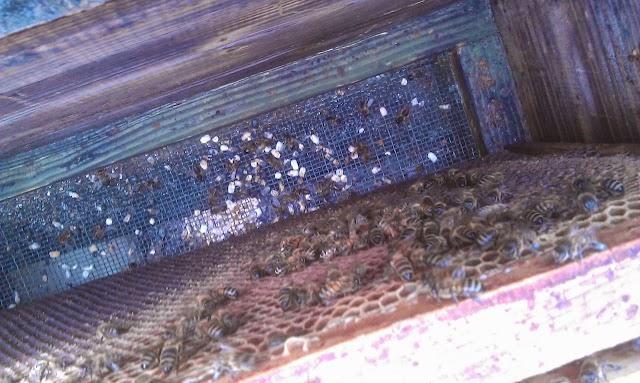 Ασκοσφαίρωση σε πολλά μελίσσια: Τρόποι θεραπείας από παλιούς μελισσοκόμους