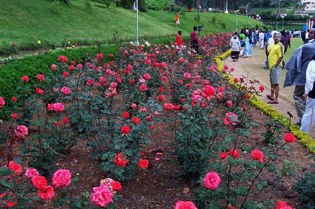 The Government Rose Garden is the largest rose garden in India.