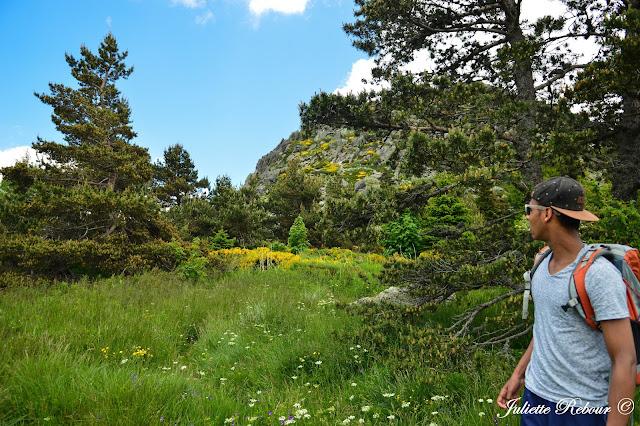 Randonnée au Mont Gerbier de Jonc en Ardèche