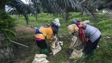 Industri Sawit Diklaim Buka 16 Juta Lapangan Kerja