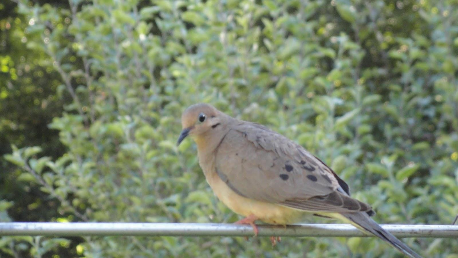 Birds in Your Backyard: Ontario - 2013 - Week Four