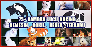 gambar lucu kucing imut gemesin - kanalmu