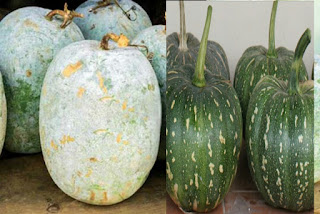 Nutrient Wasp: Gray pumpkin is a good vegetable for health care