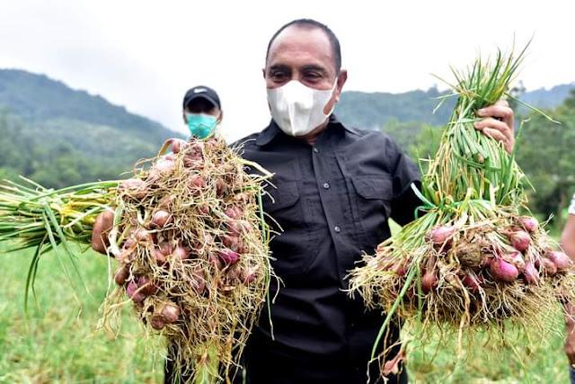 Panen Bersama Warga, Edy Janji akan Terus Mendorong Peningkatan Produksi Bawang Merah STM Hulu