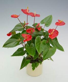 Plantas para decorar seu banheiro