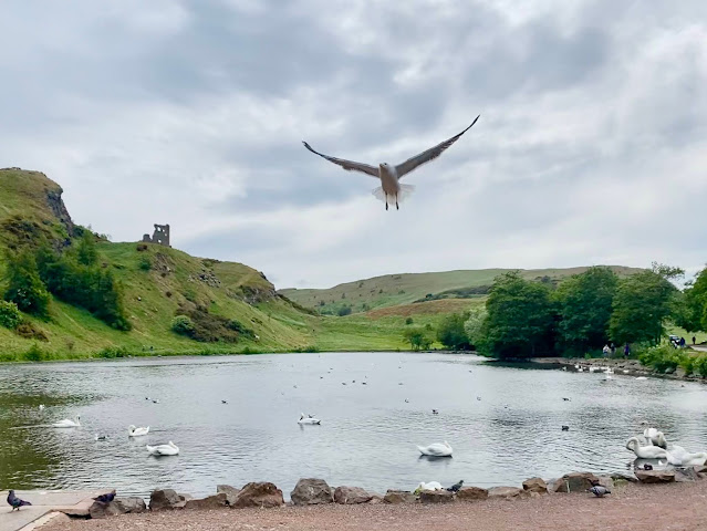 St Margaret's Loch, with swans and a seagull, in Holyrood Park, Edinburgh, Scotland