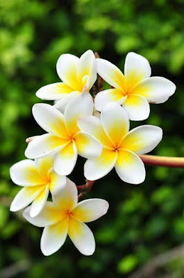 خلفيات زهور رائعة 2021