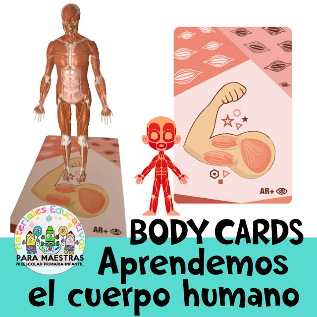 body-cards-tarjetas-aprender-cuerpo-humano