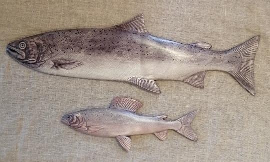 Онежский лосось и хариус из дерева