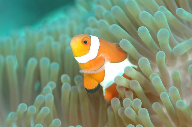 virginia aquarium with clown fish