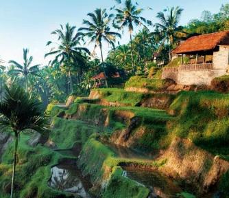Bulan Madu Romantis di Ubud, Bali yang Mengasikan