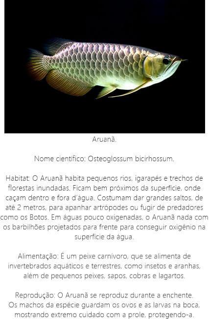 Peixe-Aruana