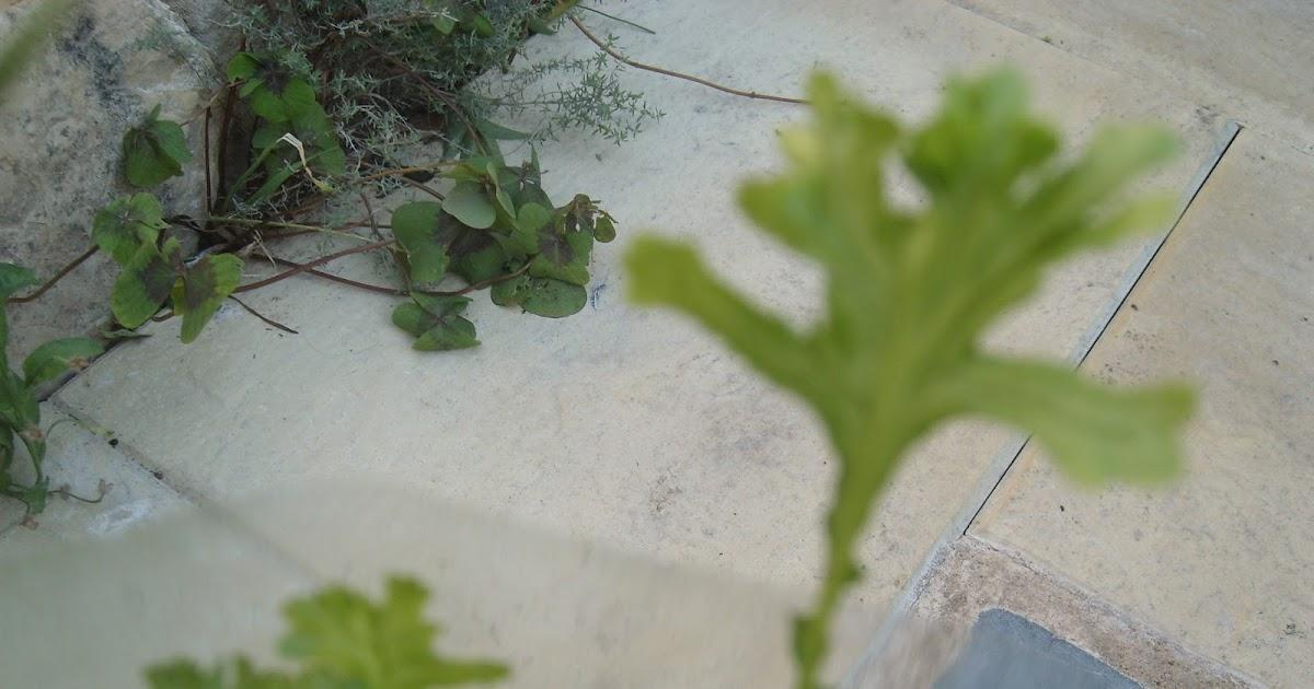 le jardin de pascaline les plantes d 39 int rieur arrosage d 39 hiver. Black Bedroom Furniture Sets. Home Design Ideas