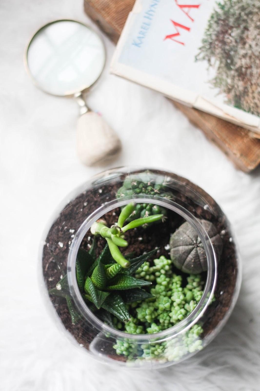 DIY cactus terrarium for £1