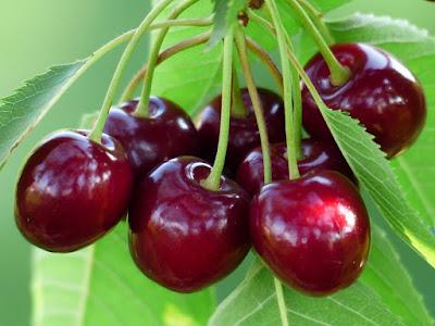 Fakta Mengenai Manfaat Daun Cherry Untuk Kesehatan