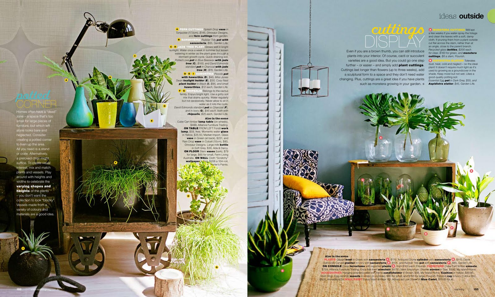 Indoor plants can be cool