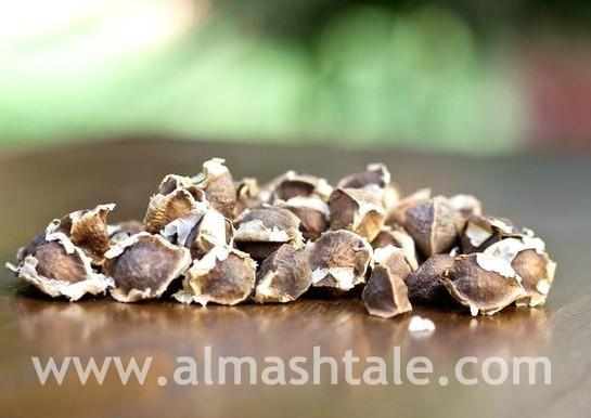 زراعة شجرة المورينجا Moringa Oleifera من البذور وكيفية العناية بها؟