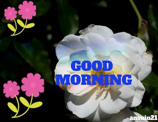 Best Good Morning HD Images, Romantic Good Morning Status, Romantic Good Morning Wallpaper,