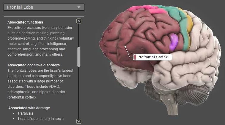 Trastorno Bipolar Del Animo Lóbulo Frontal Funciones Ejecutivas Y Tbp