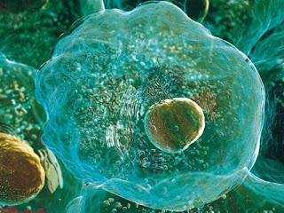 Resultado de imagen de la celula real