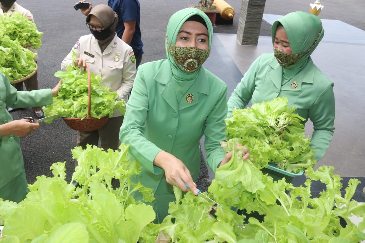 VPN - Kodim 0410KBL menggalakkan pemanfaatan lahan dengan cara penanaman sayuran Hidroponik