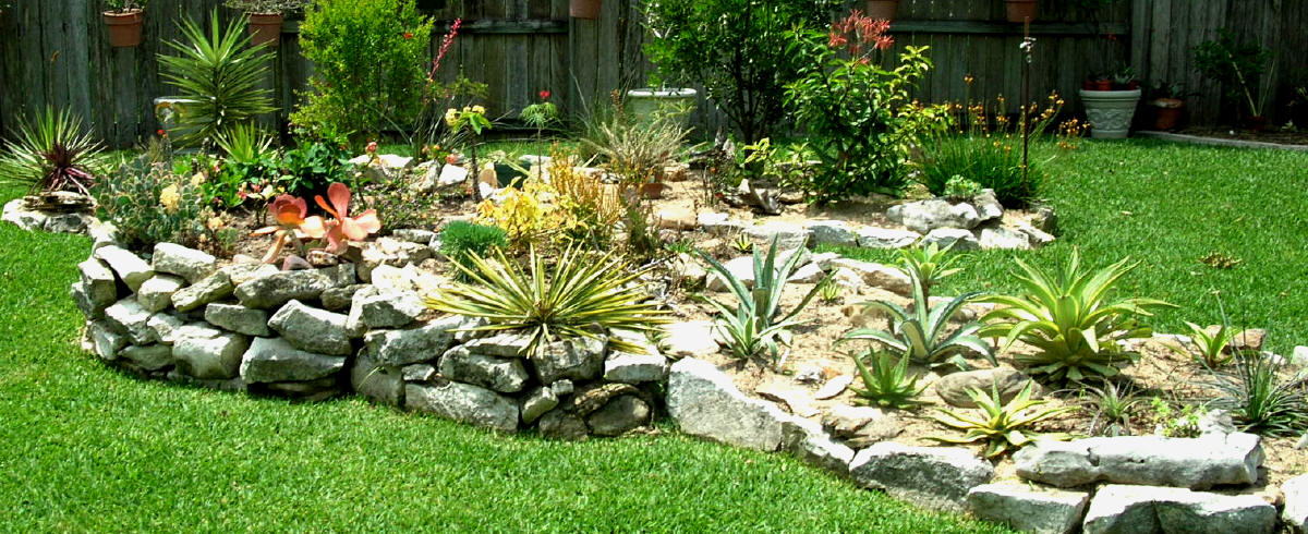 My Carolina Yard The Year Of The Succulent Tips For Creating A