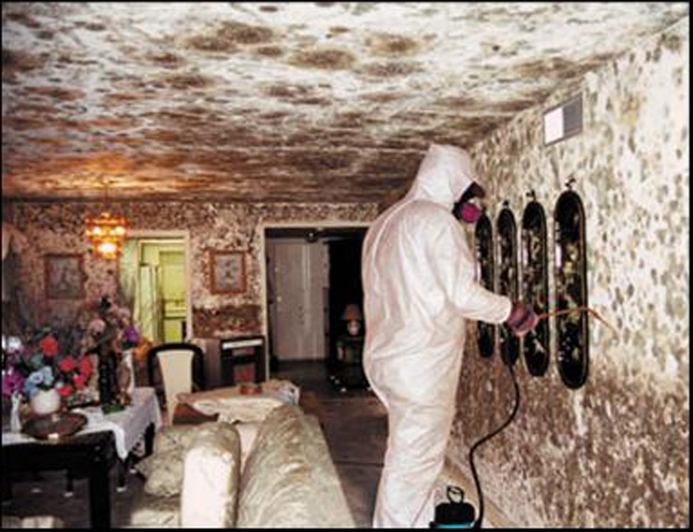 Black Mold Removal Products Or Professional Remediation