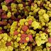 Cientistas encontram coronavírus na água de quatro praias nos EUA