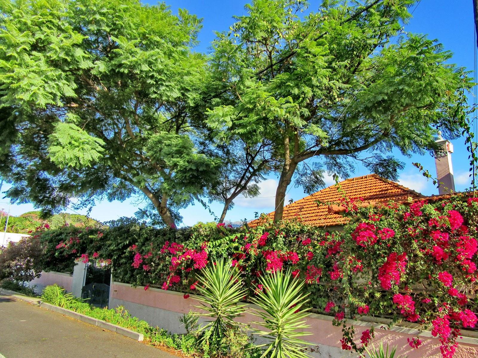 casas com paredes de flores
