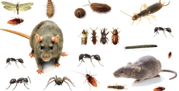 voici comment repousser les insectes de chez soi sainement sans utiliser des produits chimiques. Black Bedroom Furniture Sets. Home Design Ideas