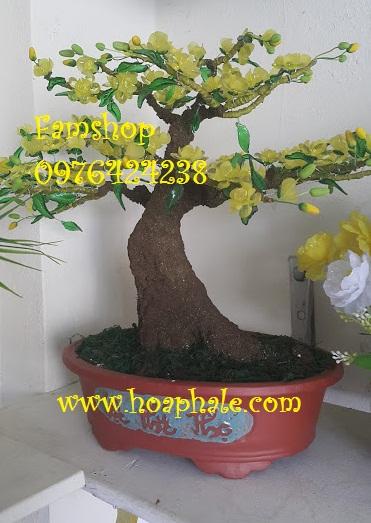 Goc bonsai cay hoa mai tai Thach Ban
