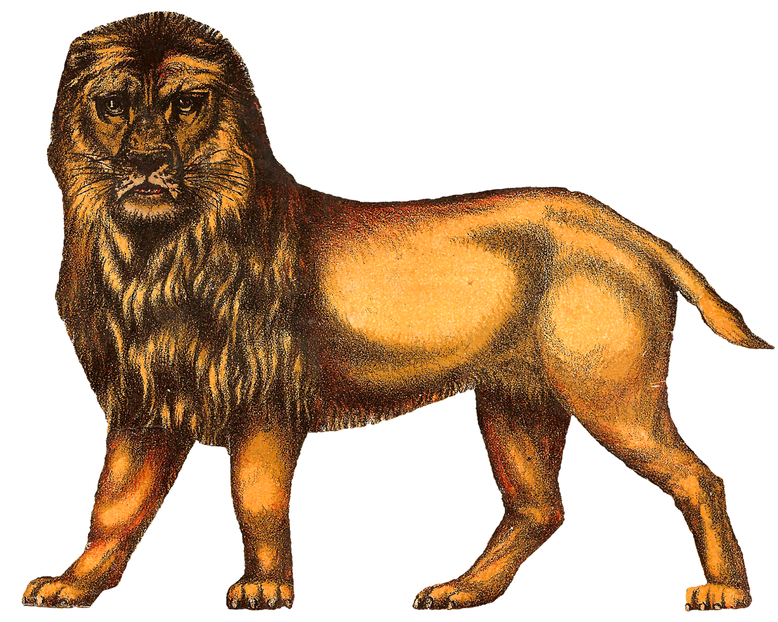 circus lion png - photo #29