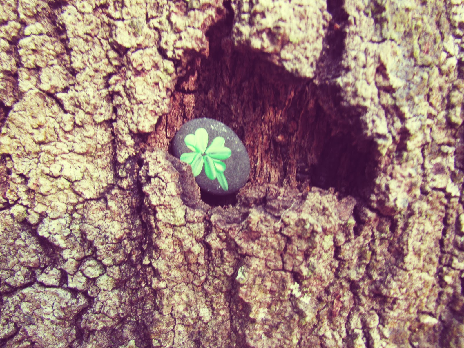 A good luck shamrock painted rock found in the bark of a tree in mother nature