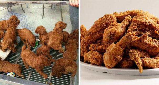 Este frango frito parece com filhotes de cachorro