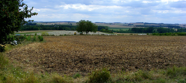 Countryside around Richelieu.  Indre et Loire, France. Photographed by Susan Walter. Tour the Loire Valley with a classic car and a private guide.