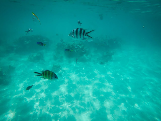 Snorkelling near Mnemba, Zanzibar