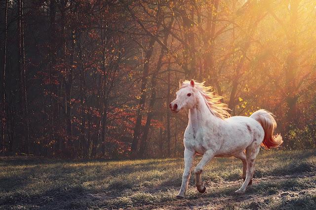 حصان أبيض جميل
