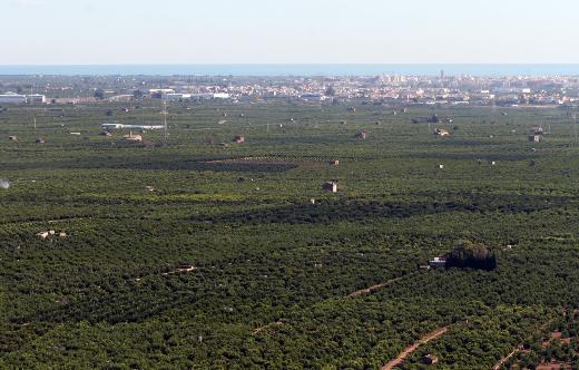 El Consell traslada al Gobierno central la petición de ayuda de los productores de la Ribera afectados por la granizada del 1 de julio