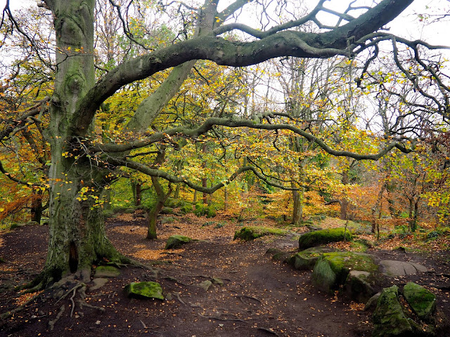 Autumn woods while hiking on Corstorphine Hill, Edinburgh, Scotland