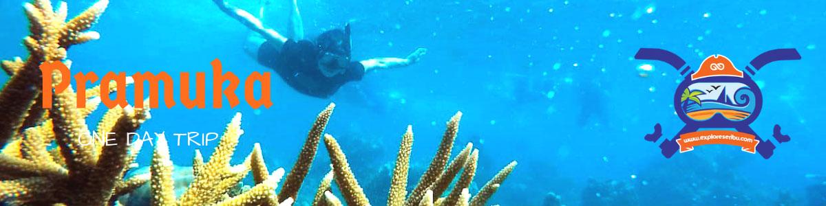 one day trip pulau pramuka