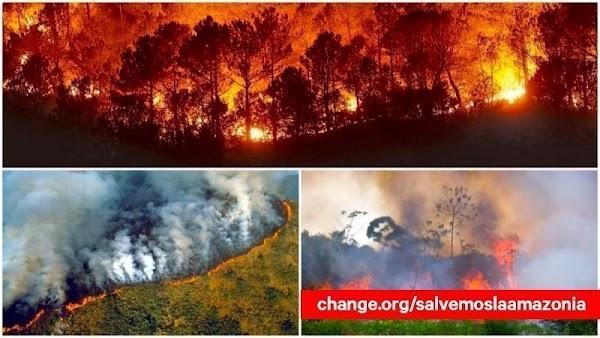 YA FIRMASTE? peticion para firmar para ayudar el amazonas.