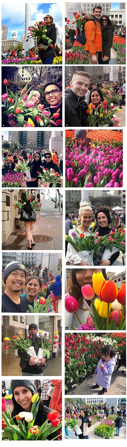 Social Media images of Amercian Tulip Day
