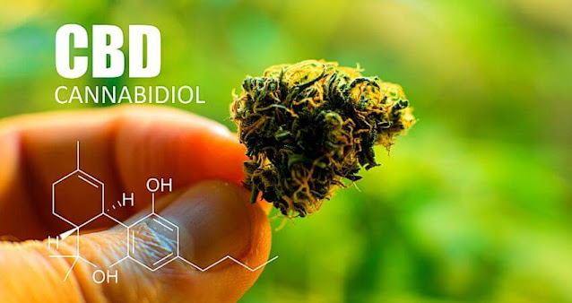 Cannabinoids in marijuana CBD THC elements