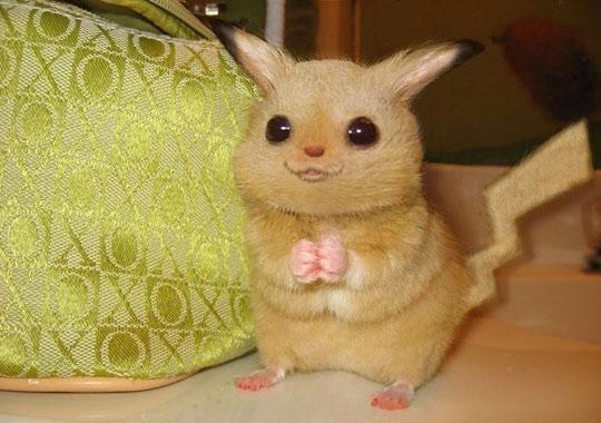 real life pikachu