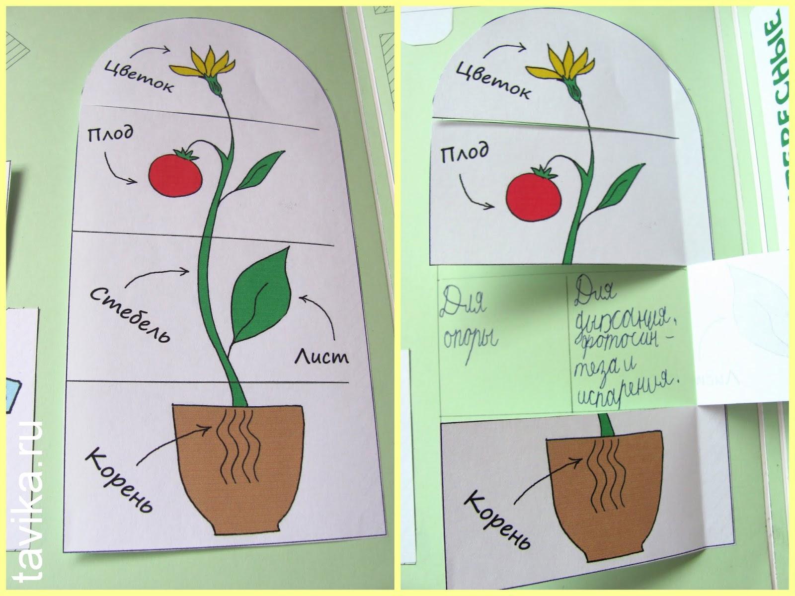 Лэпбук по ботанике