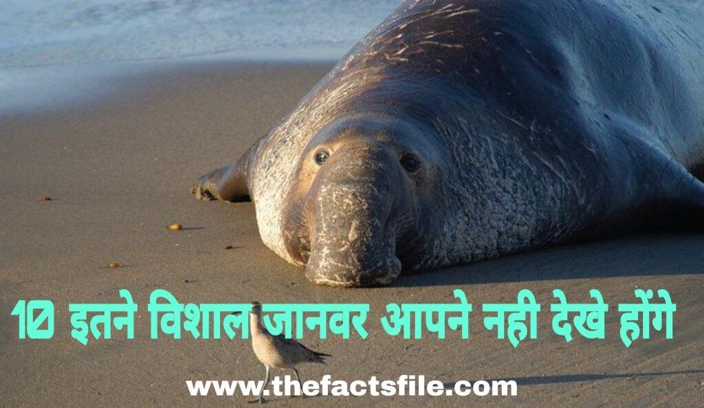 10 इतने बड़े जानवर शायद आपने नहीं देखे होंगे - 10 Biggest Animals in the World That Actually Exist