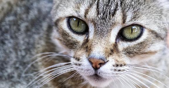 Pendarahan pada Hidung Kucing, Penyebab dan Cara Perawatan